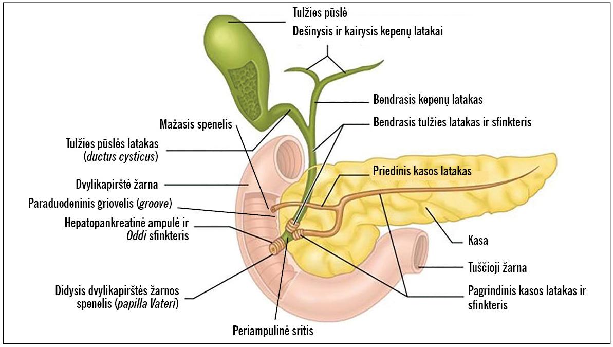 pankreatitas sunkus svorio kritimas