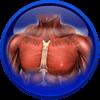 Jungiamojo audinio ir skeleto raumenų sistemos ligos