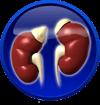 Urogenitalinės sistemos ligos