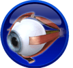 Akies ir jos priedinių organų ligos