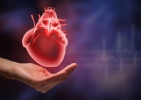 Gudobelių ekstrakto, kofermento Q10 ir vitamino C įtaka širdies ir kraujagyslių ligų profilaktikai